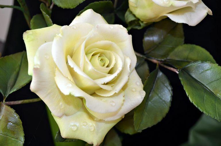 Курсы по лепке из мастики (цветы, фигурки) - расписание