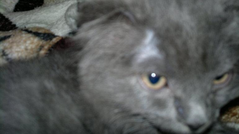 над залысины глазами котенка фото у