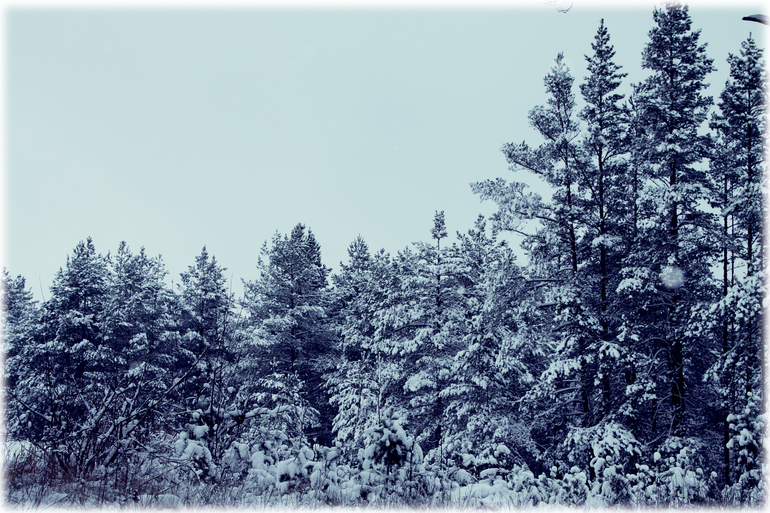 Наша зимняя сказка