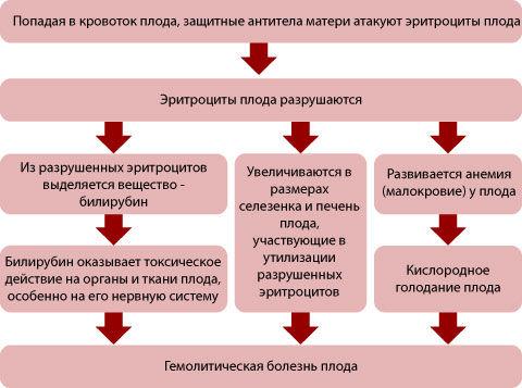 Титр-антител при беременности