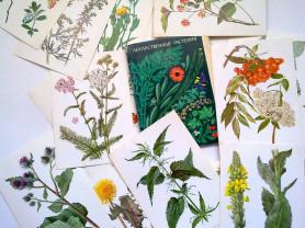 СССР, набор открыток, Лекарственные растения 1976