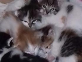 котята ищут семью)