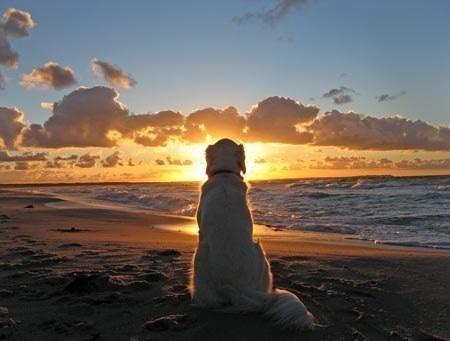 Хочу море, песок и тепла...
