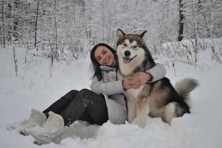 маламут аляскинский фото щенки