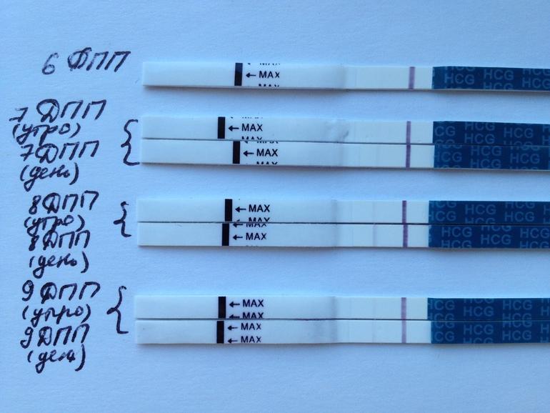 Тест не показывал беременность долго