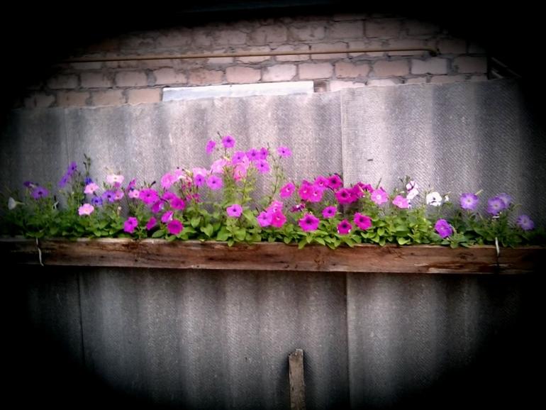 мои цветочки  2013г