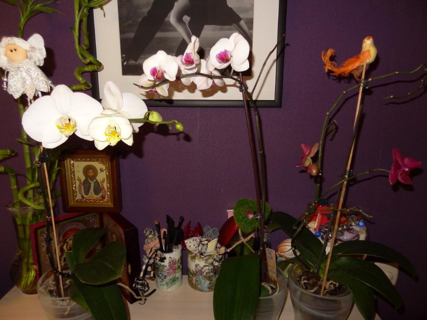 Мои орхидейные новички и не много старичков))))))