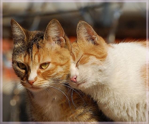 С международным днем Кошек!