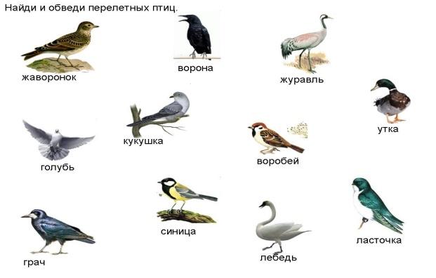 какие бывают птицы названия и фото