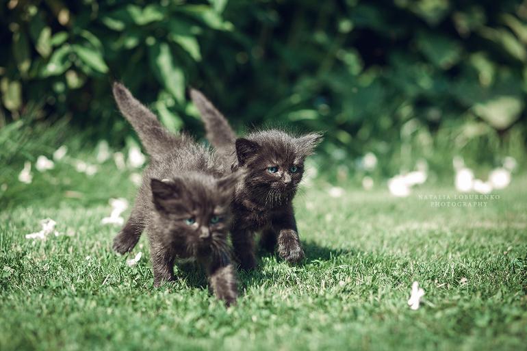 У меня всегда готов для тебя букет котов #2