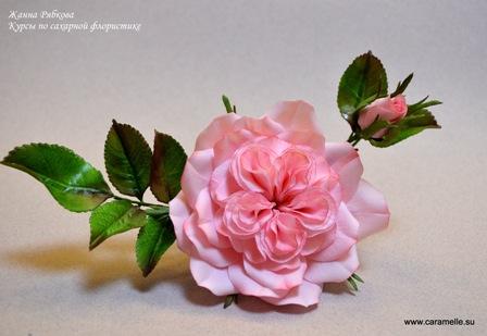 Староанглийская роза.