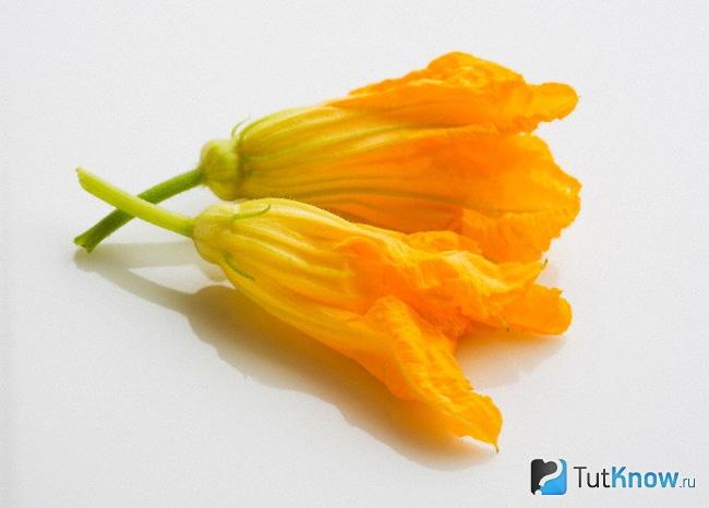 Кабачок с цветами