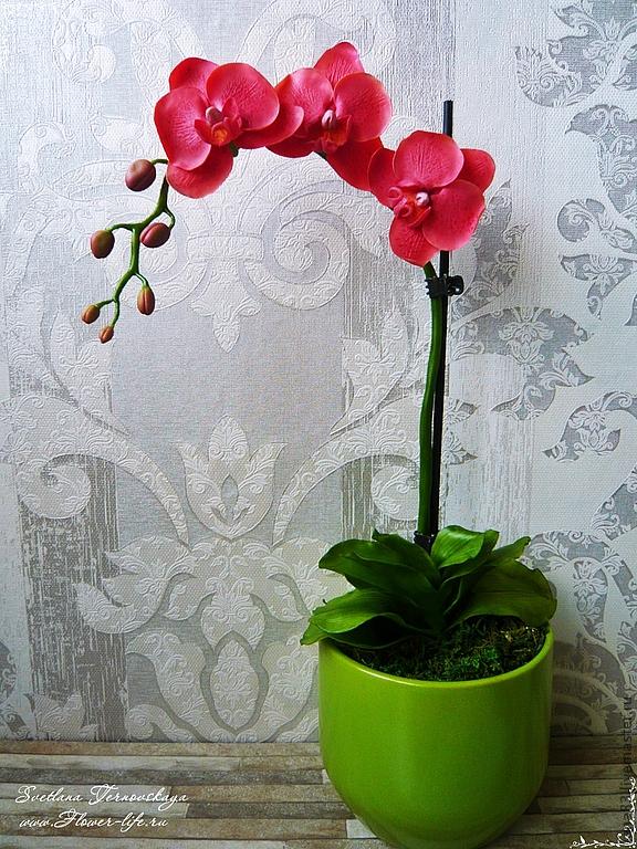 орхидея комнатная