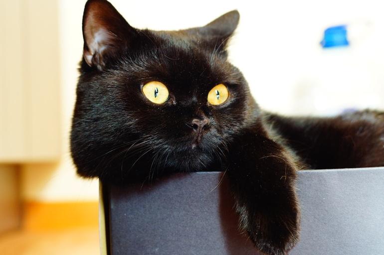 Передержка  для  котика