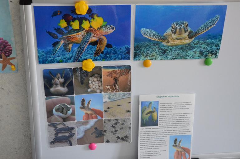 все о черепахах знакомство