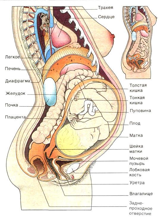 Секс во время беременостти