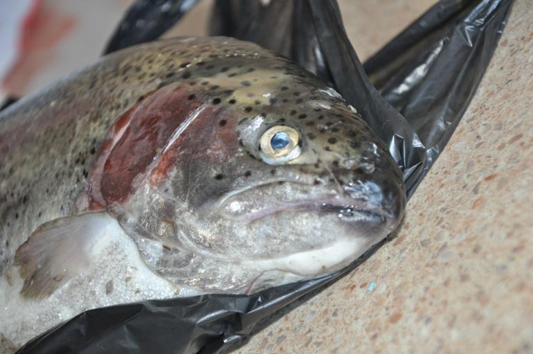 Рыбачки  мои  вернулись:))