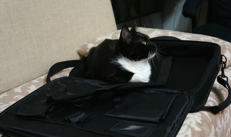 Котика в сумочке не желаете?:)