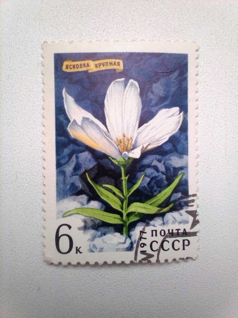 Марка 6к 1977 год СССР Ясколка Крупная