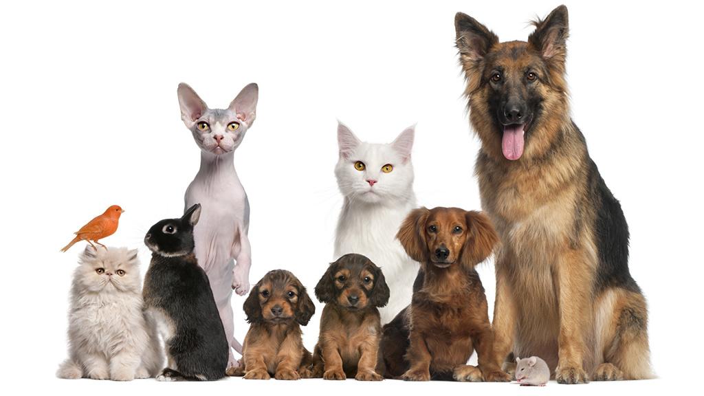 Домашняя передержка любых животных