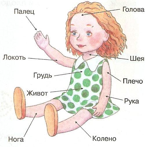 Логопедические картинки части тела
