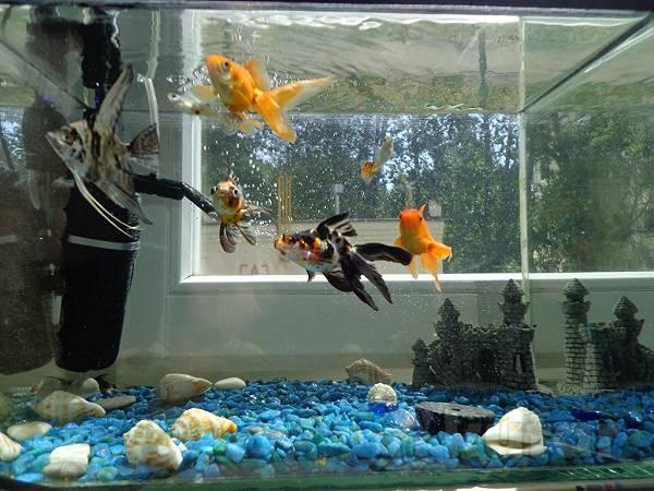 Интернет магазин аквариумов купить аквариум купить