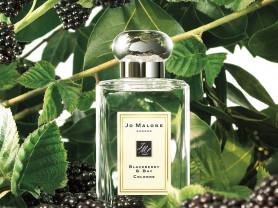 Jo Malone Blackberry & Bay Cologne 100 ml