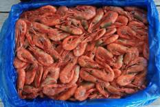 Креветки гренладские