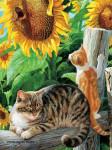Кошки в подсолнухах