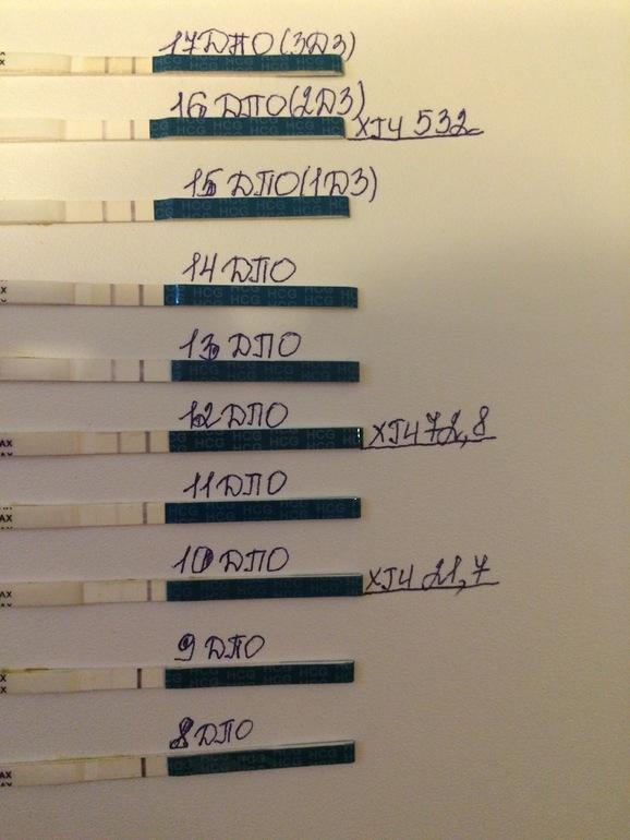 Динамика тестов с 8 дпо