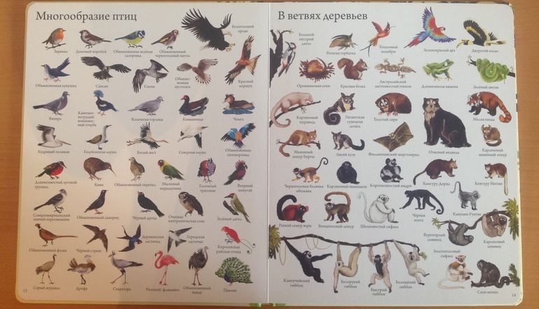 все птицы по алфавиту мужчины женщины