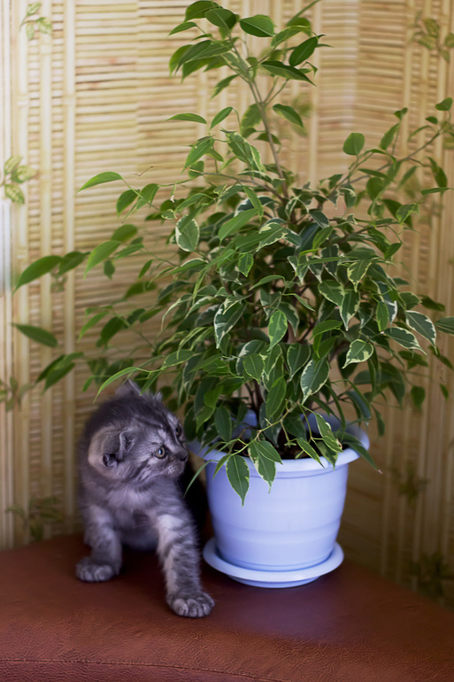 коты и цветы - Страница 2 1d56bfb9c4c2305f09d498e05af10e06